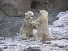 メリルの動物ニュース