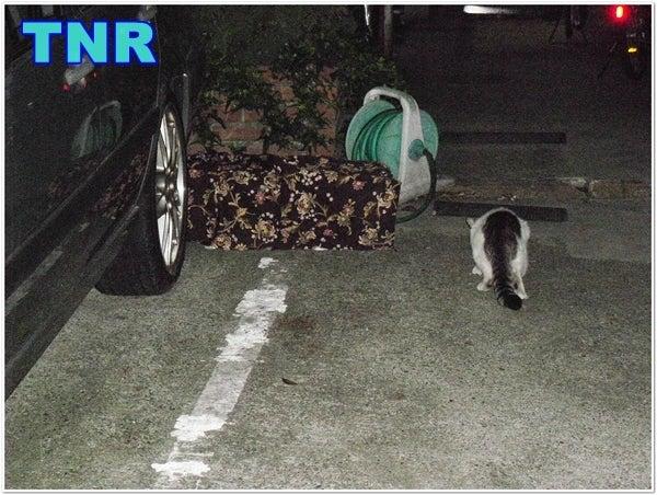 世田谷<b>猫虐待事件</b>!怪しい人物の目撃情報求む!⑤ PC版|☆゚+ <b>...</b>