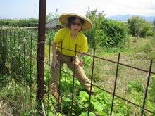 歩き人ふみの徒歩世界旅行 日本・台湾編-あゆみ収穫中2