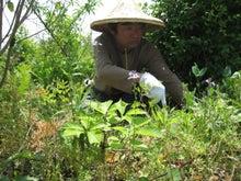 歩き人ふみの徒歩世界旅行 日本・台湾編-ふみ収穫中