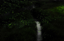 $写真家 谷角 靖オフィシャルブログ「オーロラの降る街 -谷角劇場-」Powered by Ameba-5516