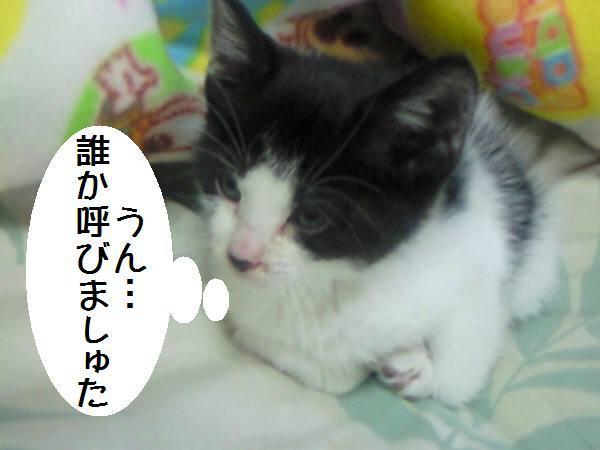 マースな一日 cat tail & dog tailの保護日誌