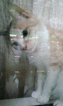 けものとけだもの(猫と俺)-100528_1757~01.jpg