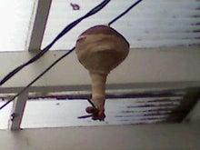 腐ってやがる・・・ぷログ-蜂の巣