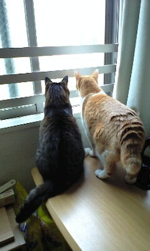ずれずれブログ…湘南で猫と暮らせば…-100529_0901~0001.jpg