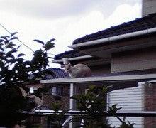 ☆蘭ラン日記☆ -2010053016280001.jpg