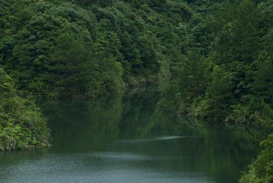 ケロケロの散歩道-湖
