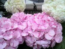 周南市 アロマのお店 Aroma drops ~smily days~-2010052815420000.jpg