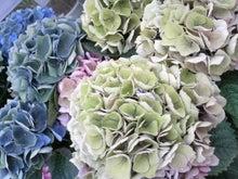 周南市 アロマのお店 Aroma drops ~smily days~-2010052815430000.jpg