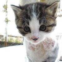 ソーシャルアパートメント住民のブログ-コップ猫