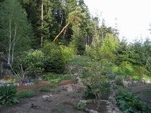 ローフード&マクロビオティックで美味しい生活♪-ジムの庭.jpg