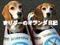 ザ☆ビーグルズ エディ&ルーシー-バナー①