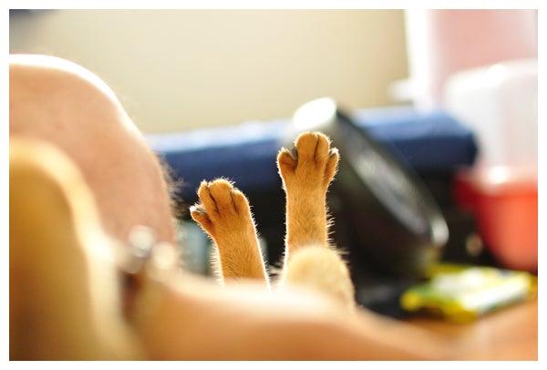 猫の写真と動画で@癒されちゃうブログ♪-アビシニアン_レオ君_645