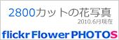 お花はいかがでしょう?-Flickr花写真