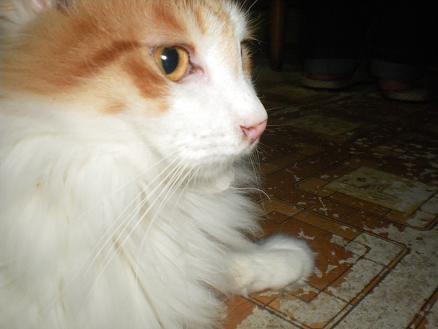 猫の風太と私と仲間たち-5