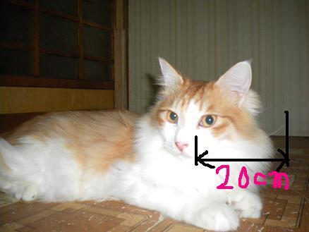 猫の風太と私と仲間たち-2