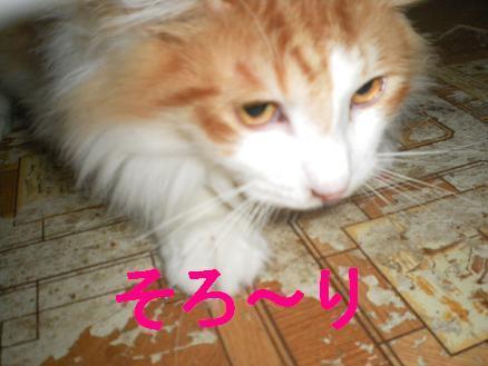 猫の風太と私と仲間たち-4
