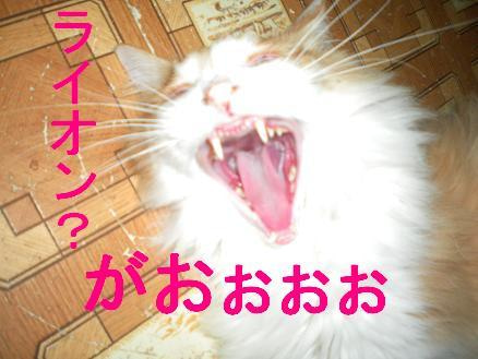 猫の風太と私と仲間たち-3