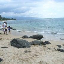Hawaii旅行記 …