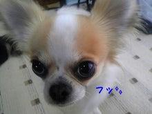 RENOA~レノア~-100311_114413_ed_ed.jpg