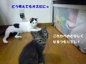そらという猫-スバルワクチン