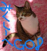 $猫カフェ 浅草ねこ園ブログ