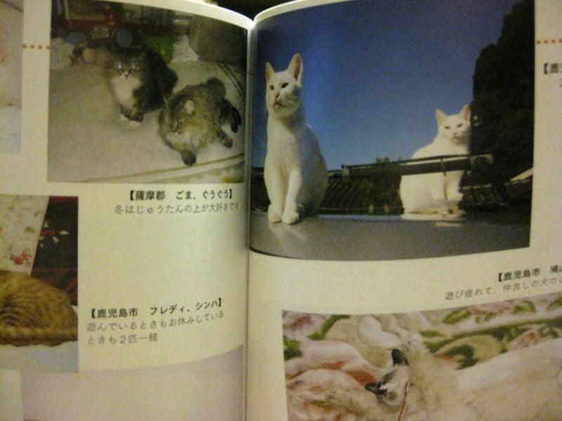 鹿児島のtoshizoのブログ