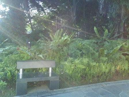 ダックス2ワン シンガポールお散歩日記