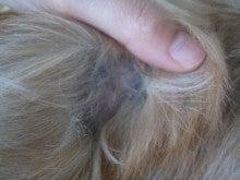 命のバトン受け取りました -かぶちゃんのアカラス治療--かぶ