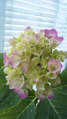 オカメインコのももちゃんと花教室と旅日記-100613_110319.jpg