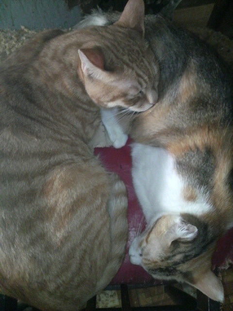 猫の風太と私と仲間たち-2010061308500001.jpg