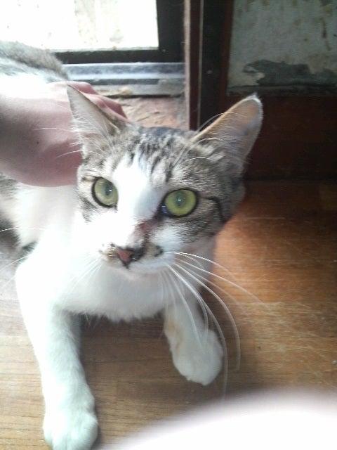 猫の風太と私と仲間たち-2010061309270000.jpg