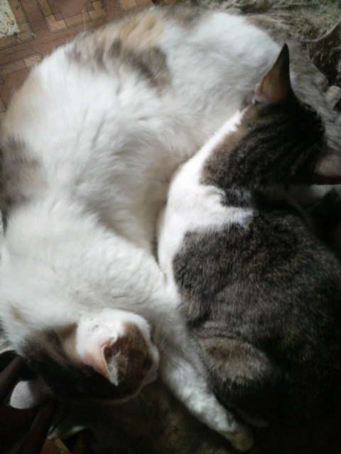 猫の風太と私と仲間たち-2010061308500000.jpg