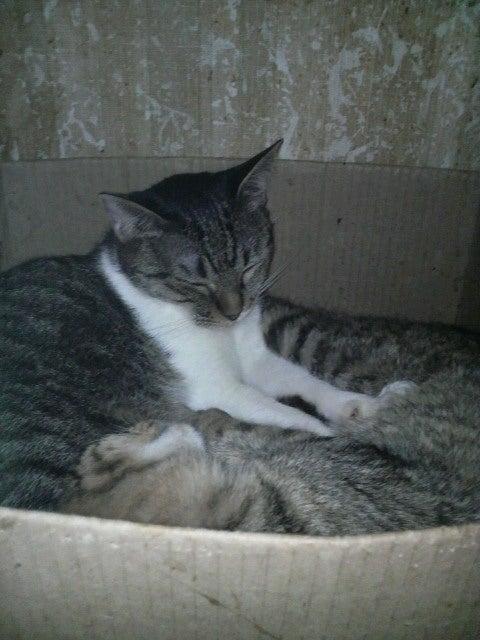 猫の風太と私と仲間たち-2010061308570001.jpg