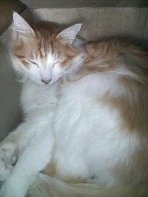 猫の風太と私と仲間たち-2010061308510000.jpg