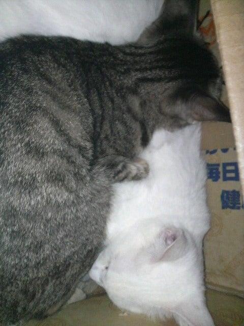猫の風太と私と仲間たち-2010061308570000.jpg