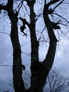 夫婦世界旅行-妻編-にょ~~の木