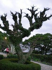 夫婦世界旅行-妻編-どほぉぉ!の木
