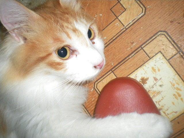 猫の風太と私と仲間たち-6