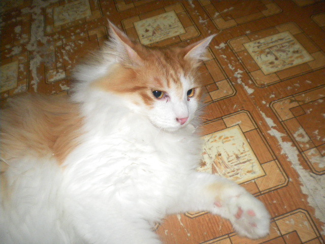 猫の風太と私と仲間たち-1