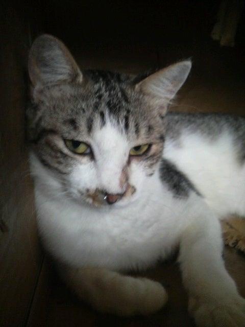 猫の風太と私と仲間たち-2010061507170000.jpg