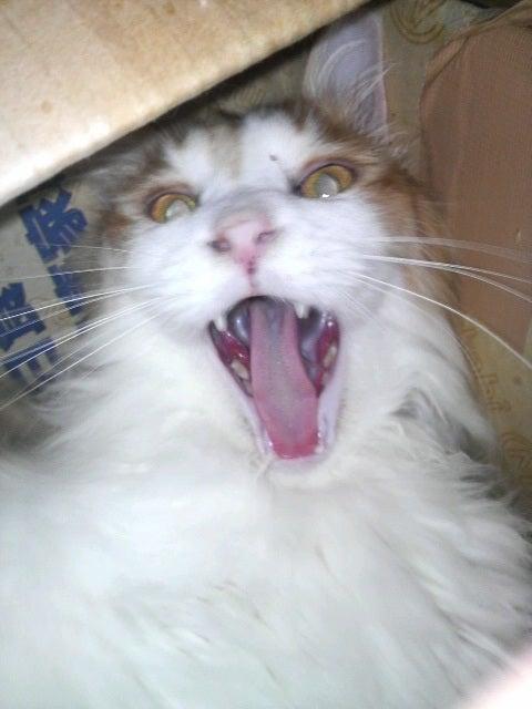 猫の風太と私と仲間たち-2010061507180000.jpg