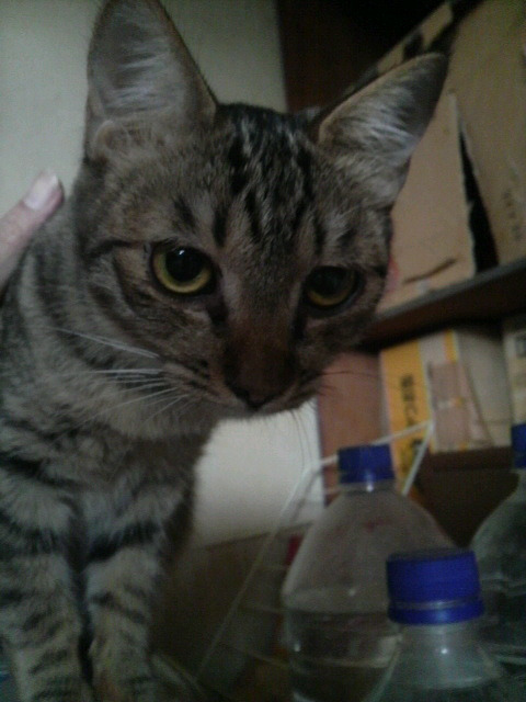 猫の風太と私と仲間たち-2010061507130000.jpg