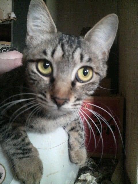 猫の風太と私と仲間たち-2010061507160000.jpg