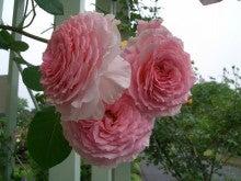 花ログ2009-1