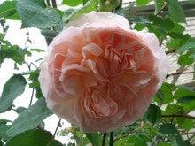 花ログ2009-2