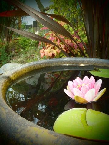 ガーデンラボ庭園館のブログ