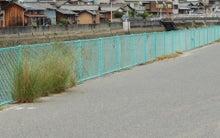 小豆島日記-伝法川
