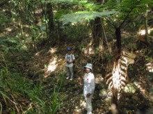 小笠原エコツアー 父島エコツアー         小笠原の旅情報と小笠原の自然を紹介します-弟島