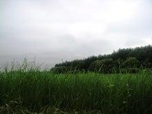 ムツゴロウ動物王国のブログ-草も伸びて